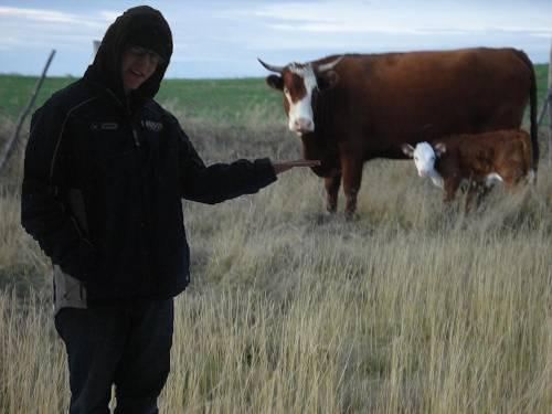feeding-a-cow2.jpg